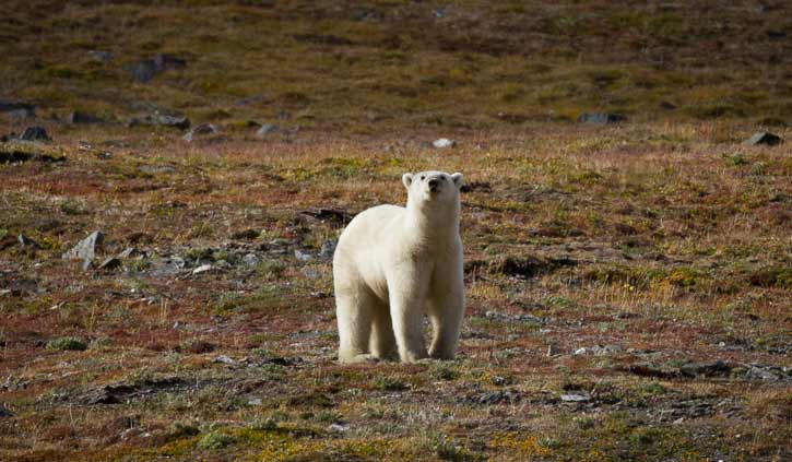©1233KOvsyanikova-Wrangel-Island-Overland-Traverse-(2)