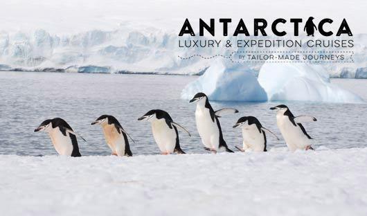 Antarctica-1----Chinstrap-penguins-Antarctic-Peninsula-Alex-Burridge