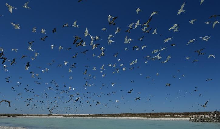 PONANT Lacepede Islands Kimberley Australia