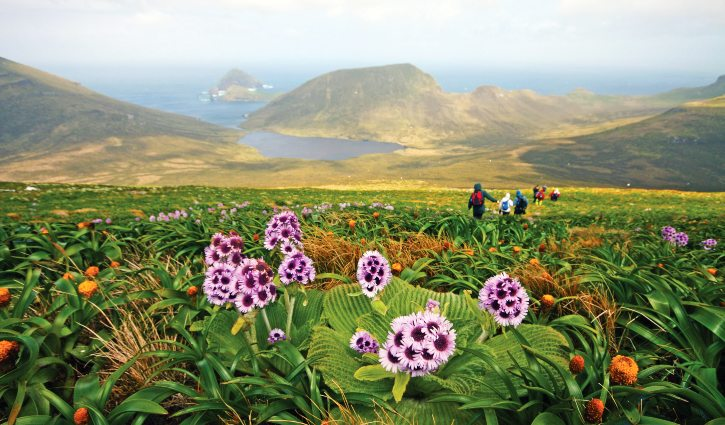 Heritage Expeditions-®TBickford Mount Honey, Campbell Island