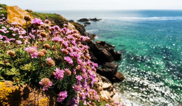 Wildflowers, Saltee Islands, Poseidon Expeditions