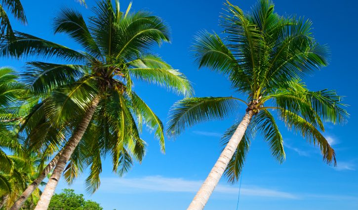 Palm Trees, Indonesia