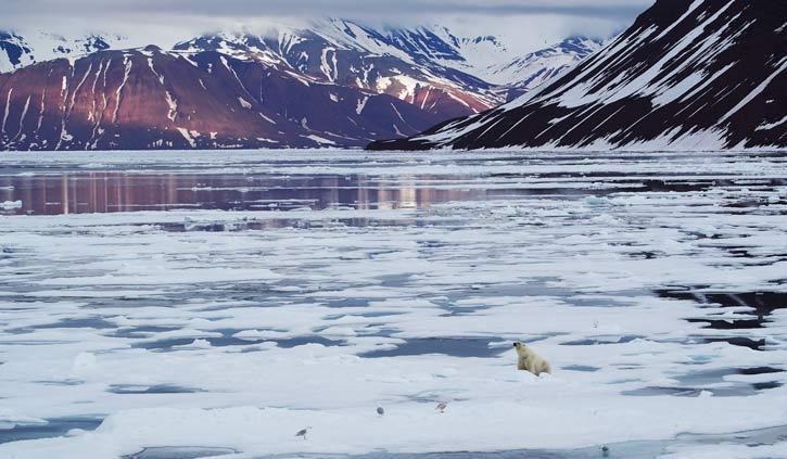 Polar-bear-Spitsbergen
