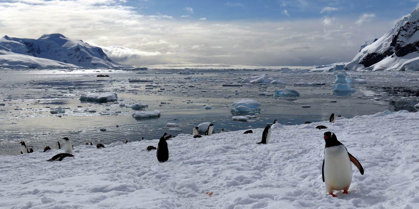 Nekko-Harbour-Penguin-