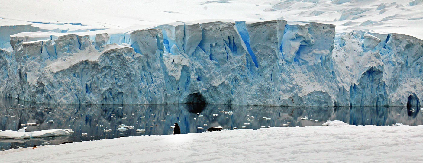 Neko Harbour Antarctica Penguin and Glacier