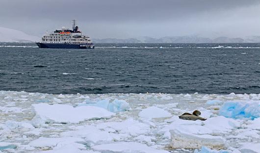 Seal-at-Port-Lockroy