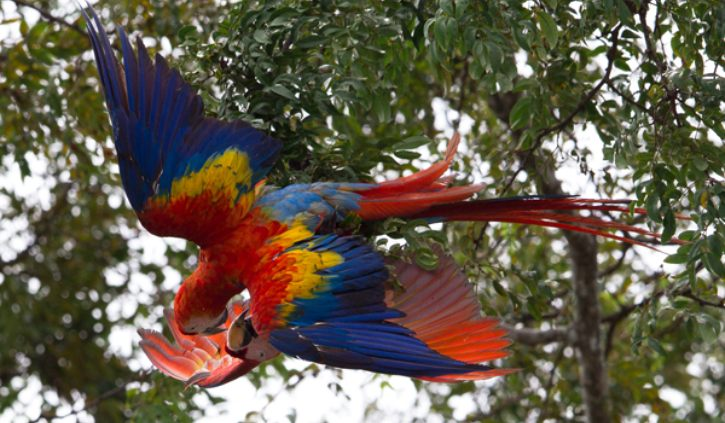 Excpetional Experiences macaw courthip La pa rios resize