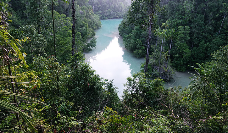 Jungles of Raja Ampat